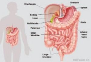 Gut_Participation_In_Metabolism