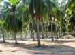 SRI LANKA: 10 acre plots near beach For Sale