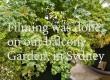 Health Benefits of Garden Parsley – By Dr Harold Gunatillake